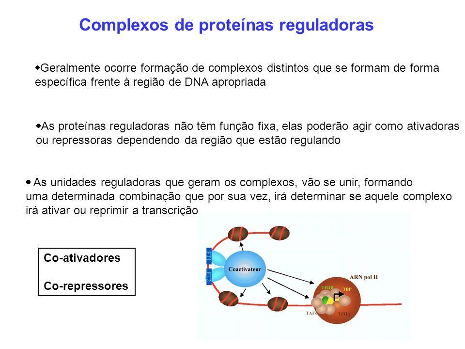 Complexos de proteínas reguladoras
