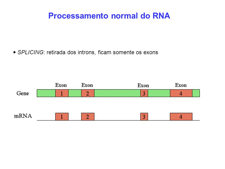 Processamento normal do RNA