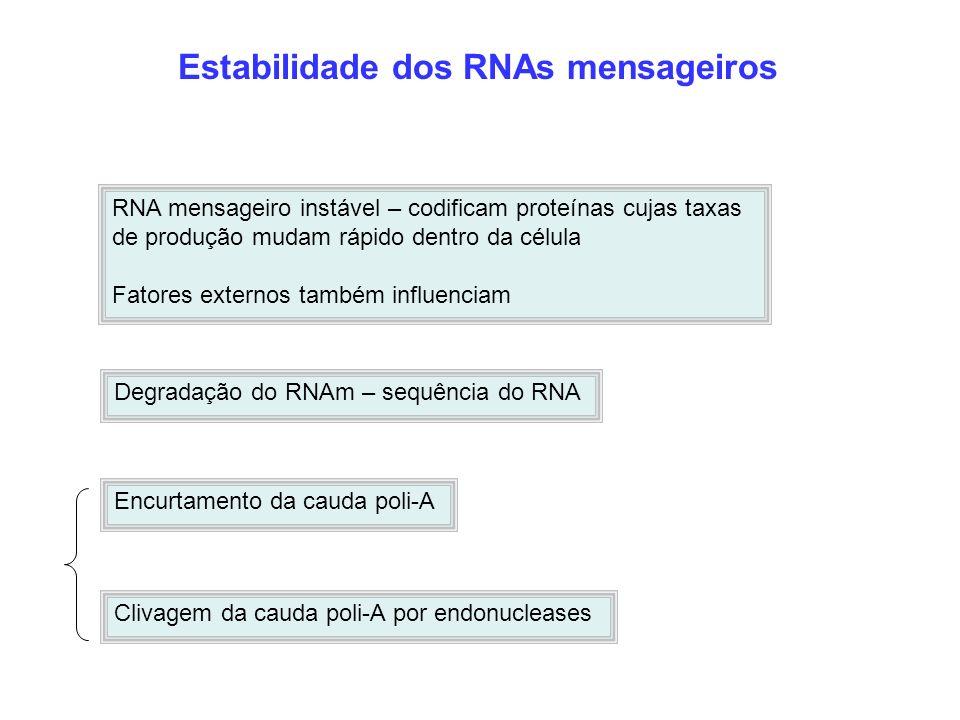 Estabilidade dos RNAs mensageiros