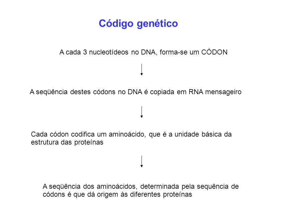Código genético A cada 3 nucleotídeos no DNA, forma-se um CÓDON