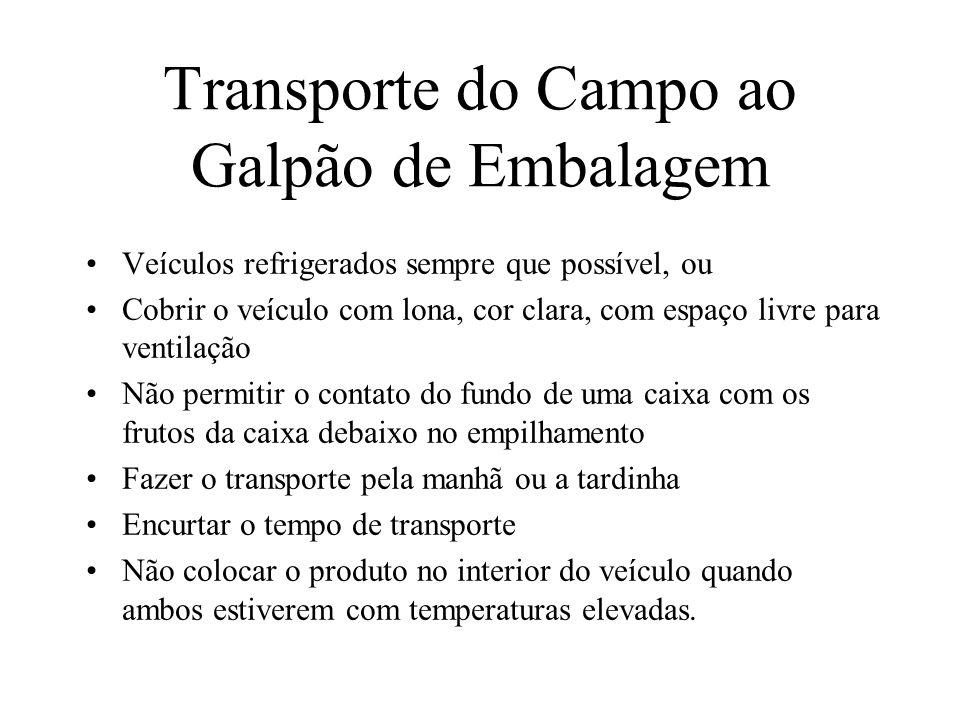 Transporte do Campo ao Galpão de Embalagem