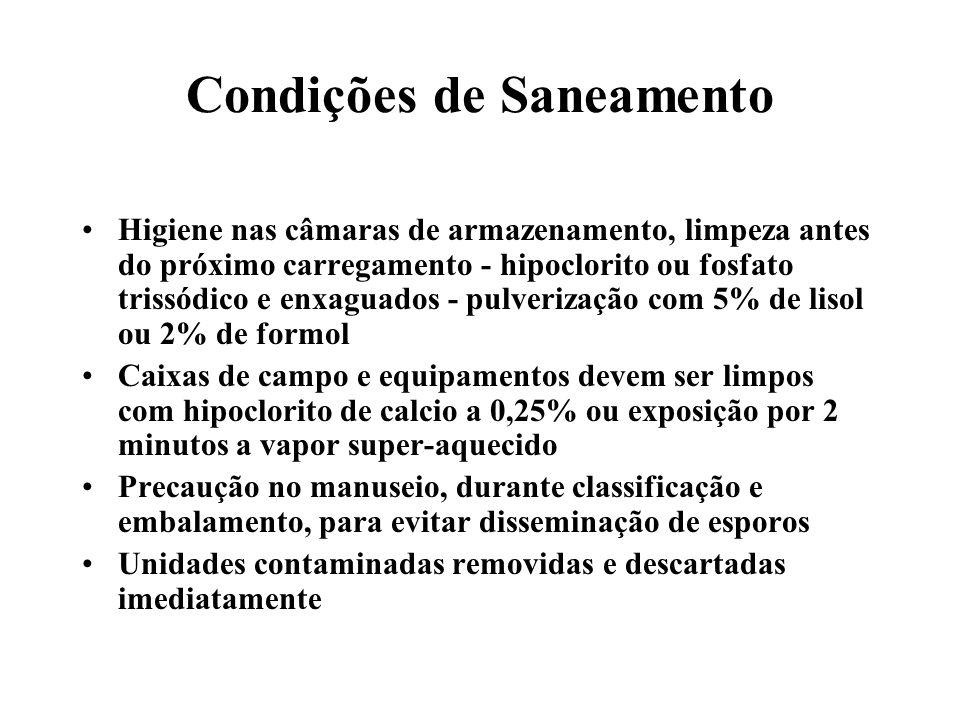 Condições de Saneamento
