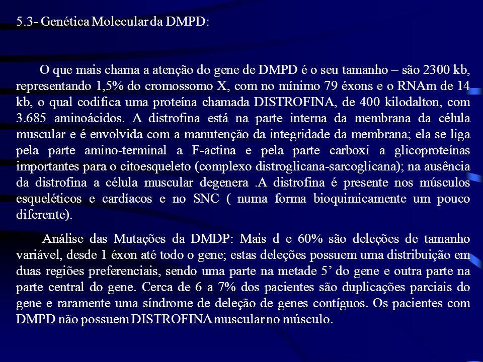5.3- Genética Molecular da DMPD: