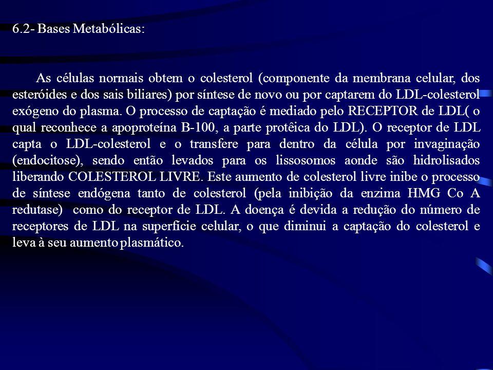 6.2- Bases Metabólicas: