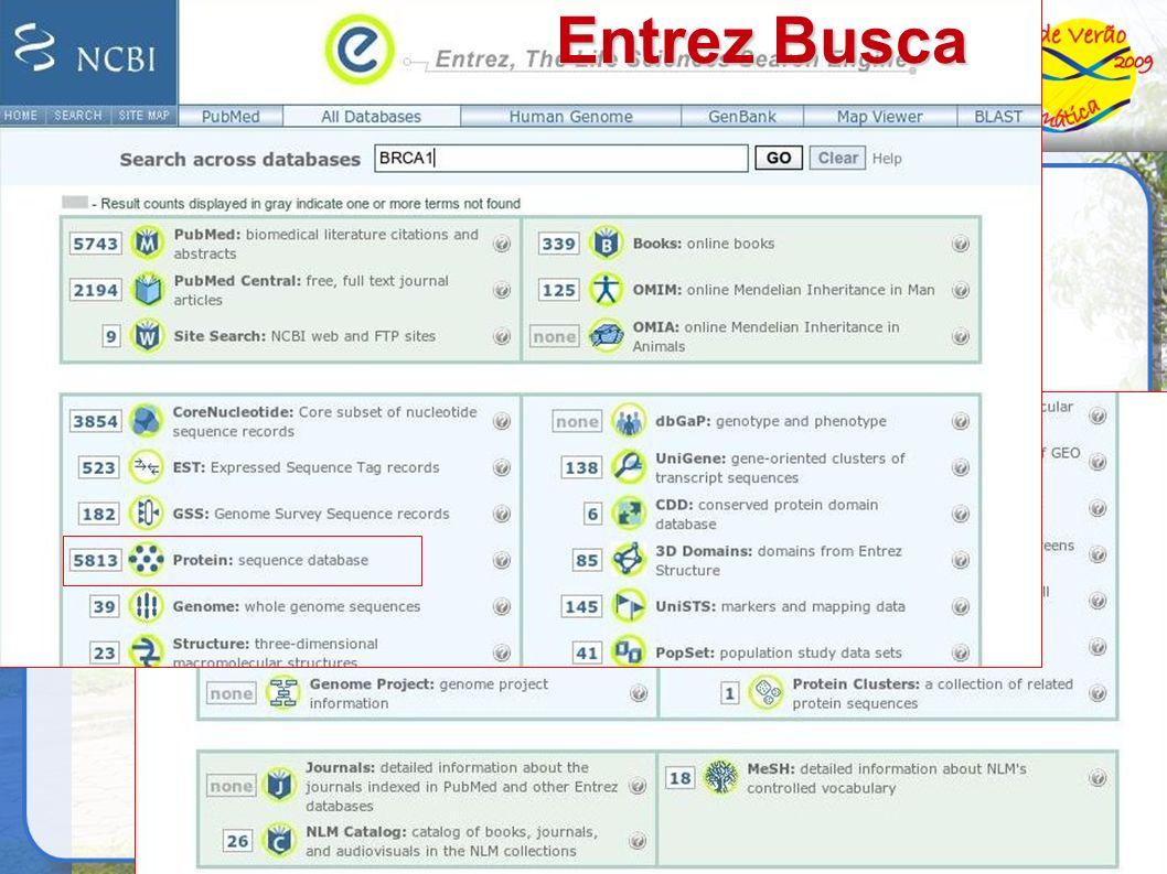 Entrez Busca 6