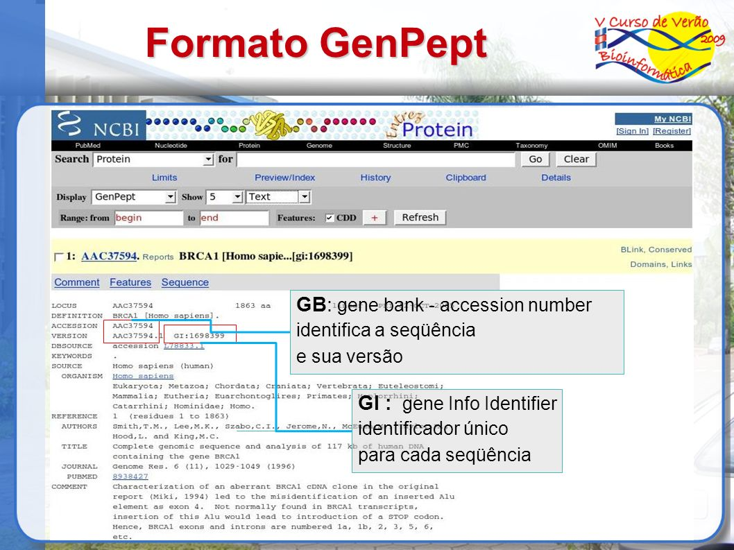 Formato GenPept GB: gene bank - accession number