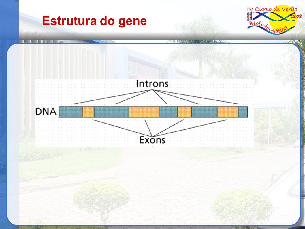 Estrutura do gene