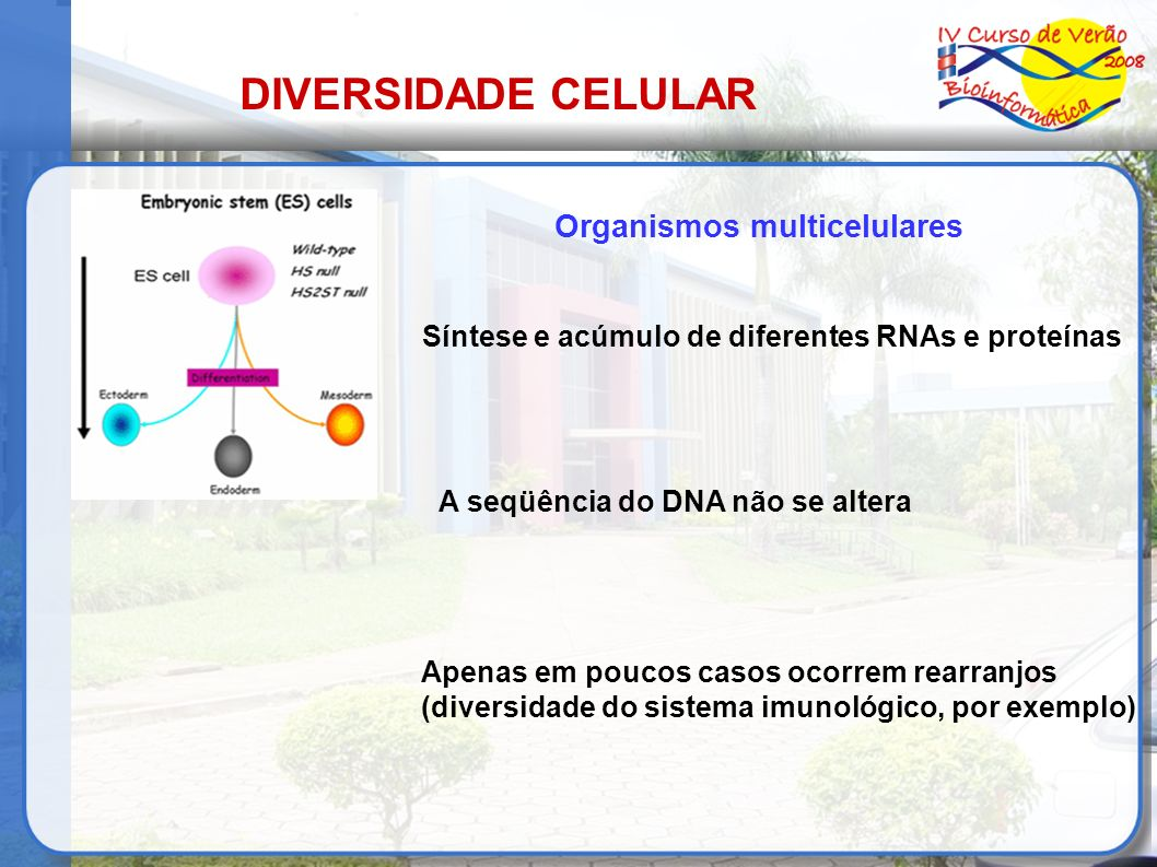 DIVERSIDADE CELULAR Organismos multicelulares
