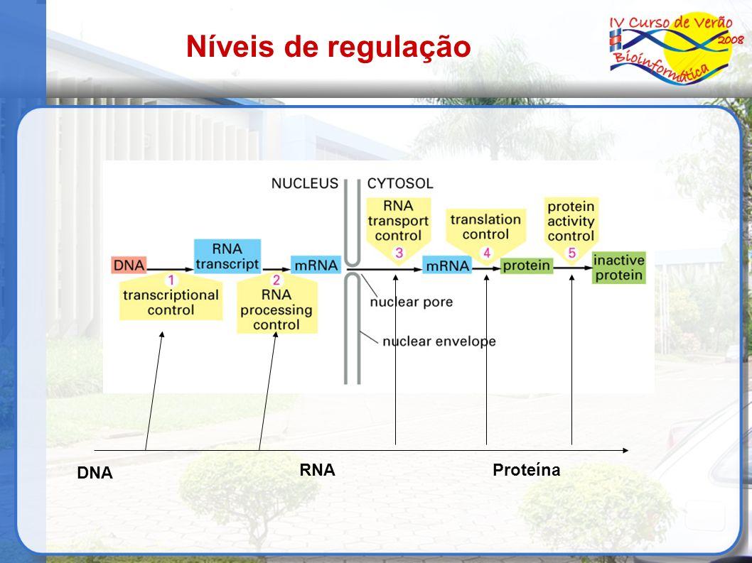 Níveis de regulação DNA RNA Proteína