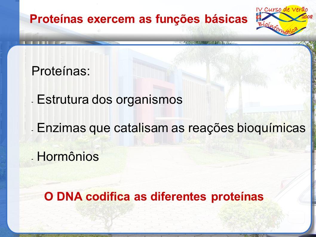 Estrutura dos organismos Enzimas que catalisam as reações bioquímicas