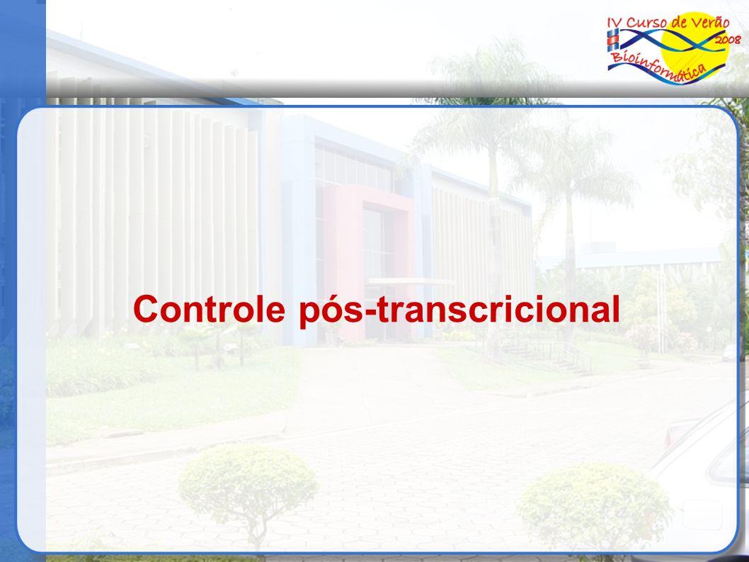 Controle pós-transcricional