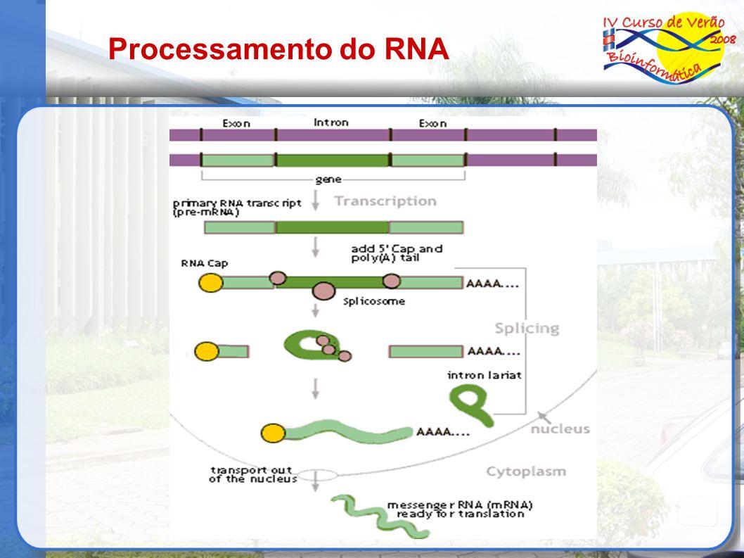 Processamento do RNA