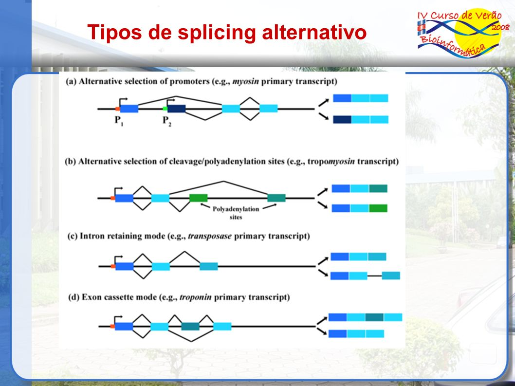 Tipos de splicing alternativo