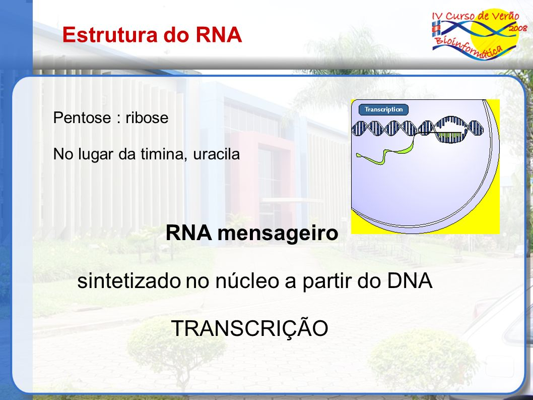 sintetizado no núcleo a partir do DNA