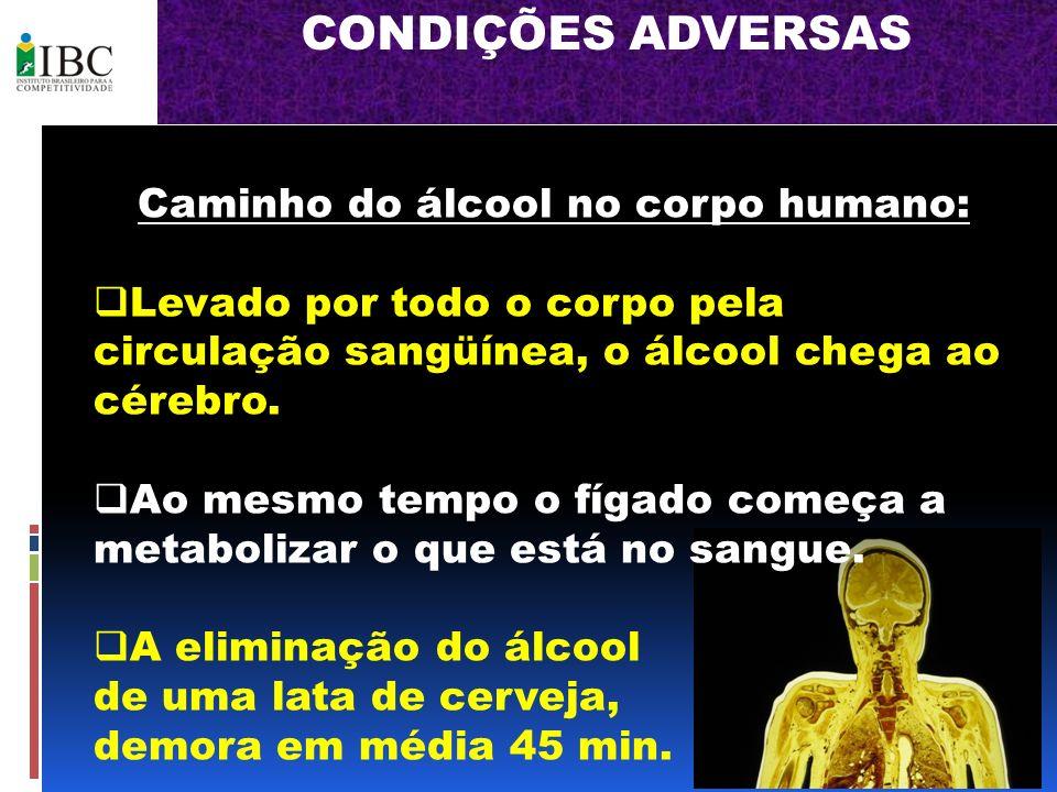 Caminho do álcool no corpo humano: