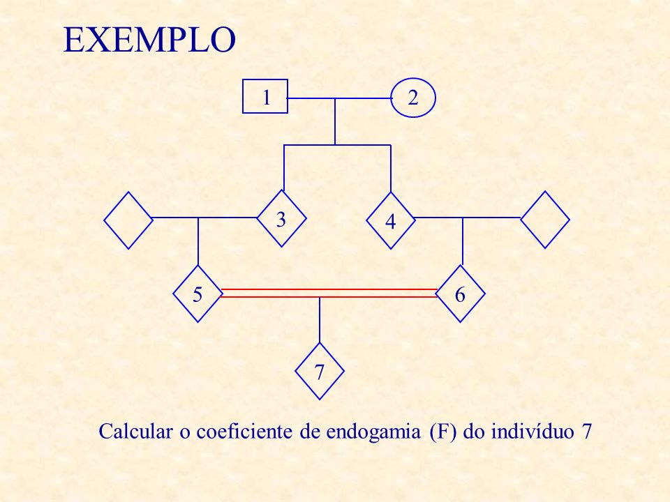 EXEMPLO 1 2 3 4 5 6 7 Calcular o coeficiente de endogamia (F) do indivíduo 7