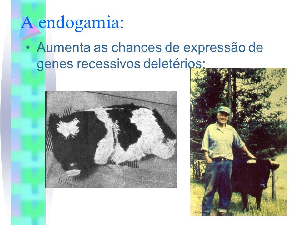 A endogamia: Aumenta as chances de expressão de genes recessivos deletérios;