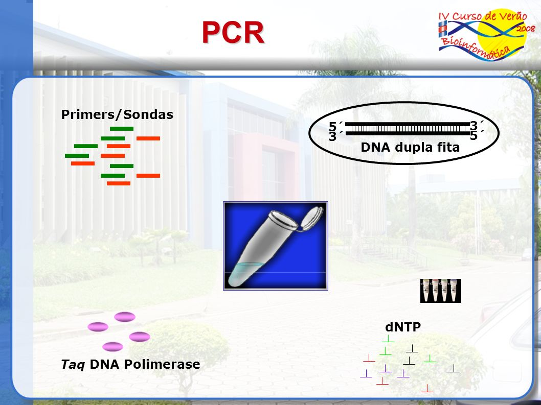 PCR Primers/Sondas 5´ 3´ 3´ 5´ DNA dupla fita Taq DNA Polimerase dNTP