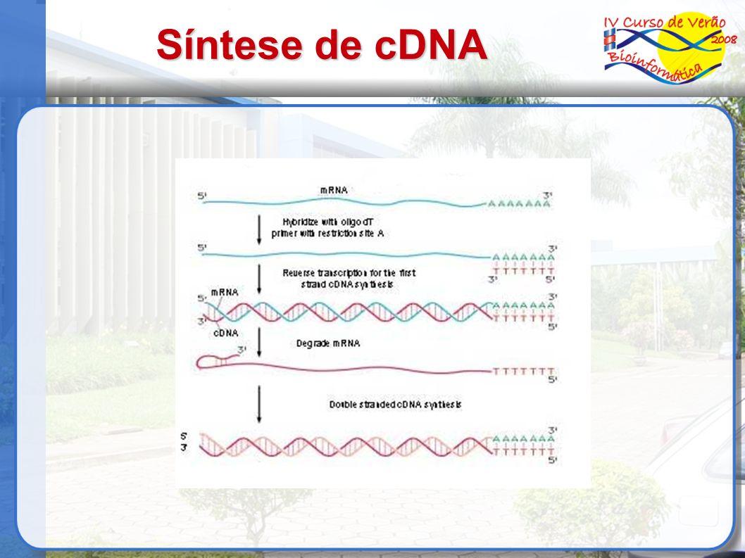 Síntese de cDNA
