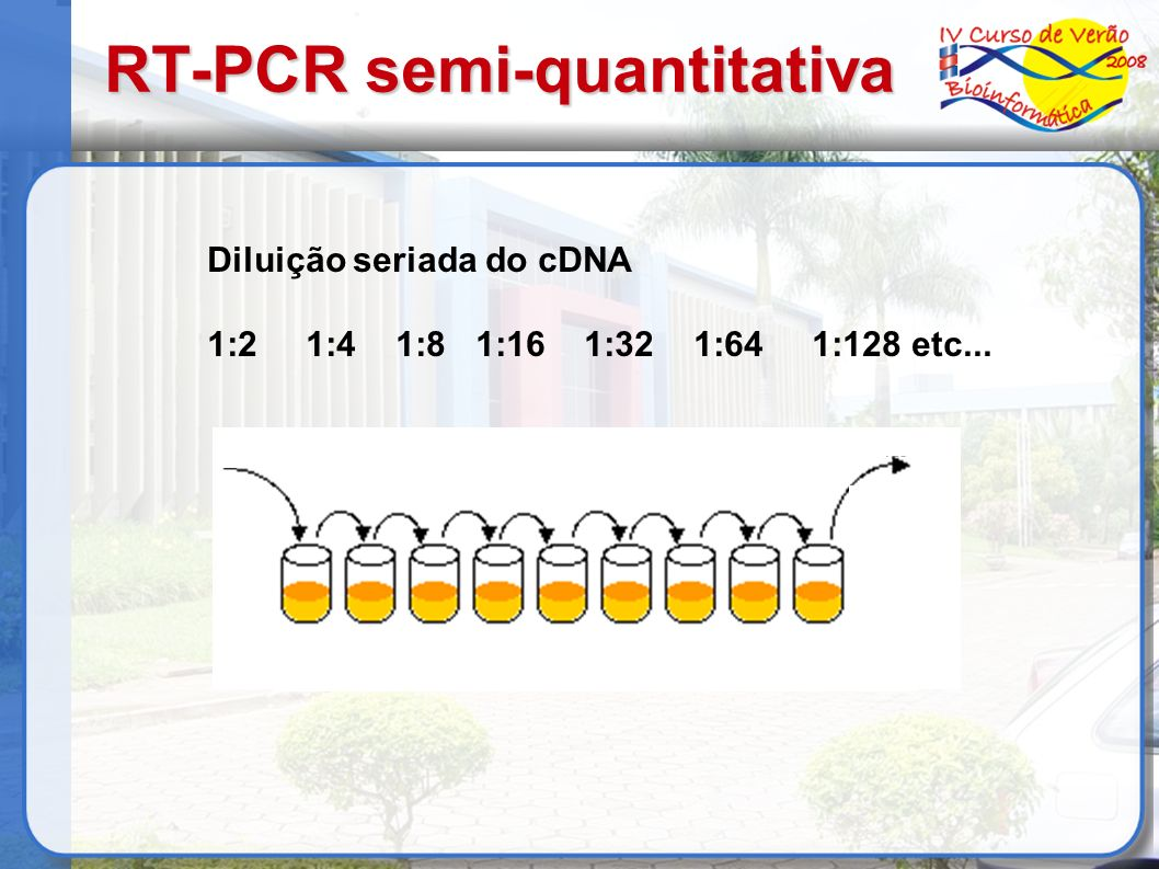 RT-PCR semi-quantitativa