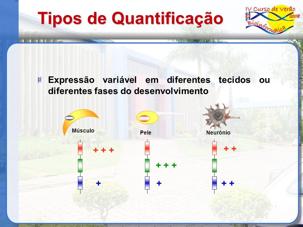 Tipos de Quantificação