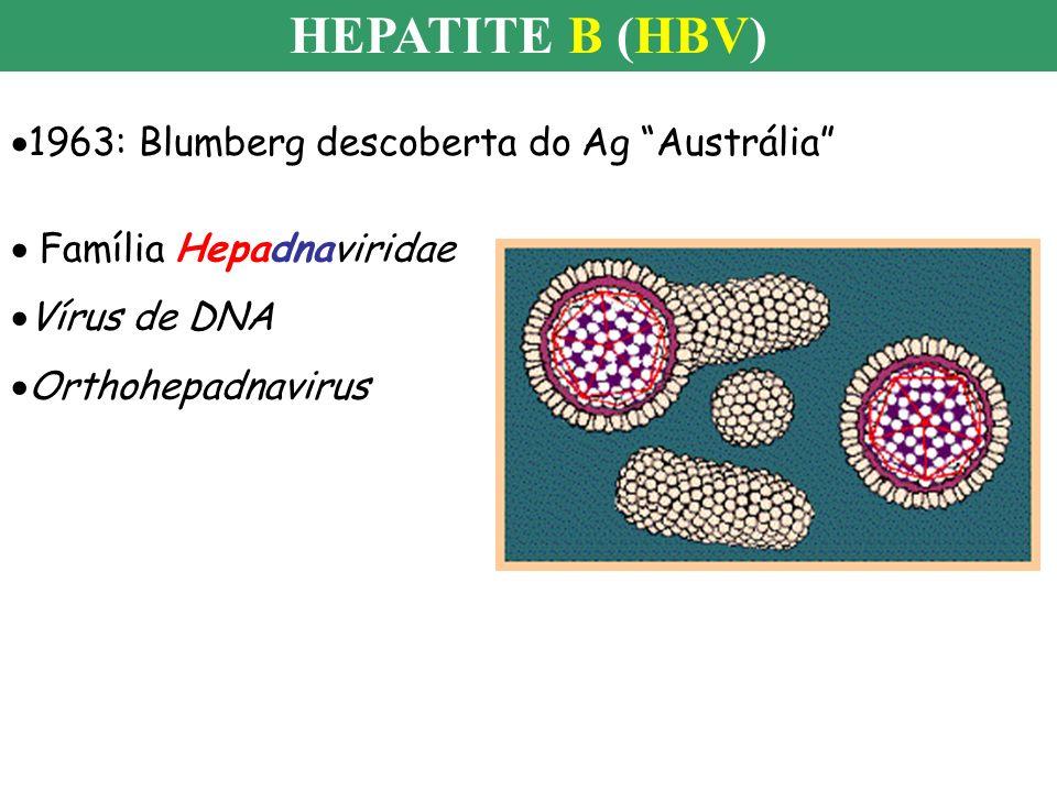 HEPATITE B (HBV) 1963: Blumberg descoberta do Ag Austrália