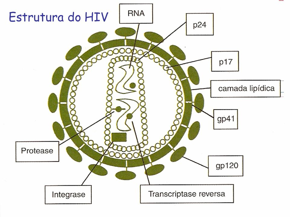 Estrutura do HIV