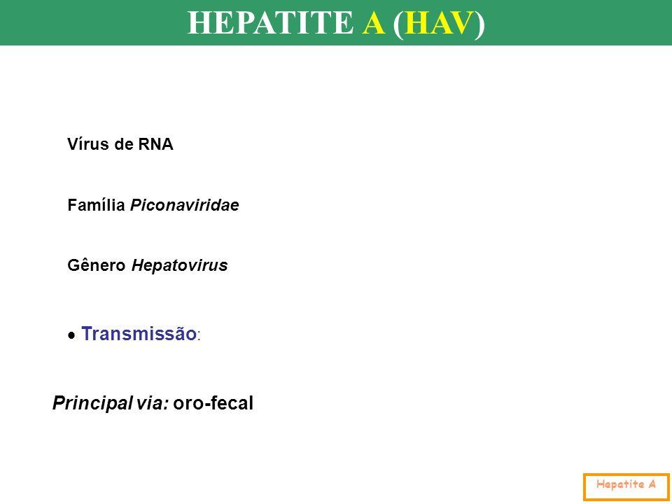 HEPATITE A (HAV) Transmissão: Principal via: oro-fecal Vírus de RNA