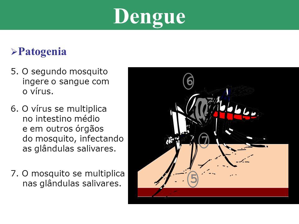 Dengue 6 7 5 Patogenia 5. O segundo mosquito ingere o sangue com