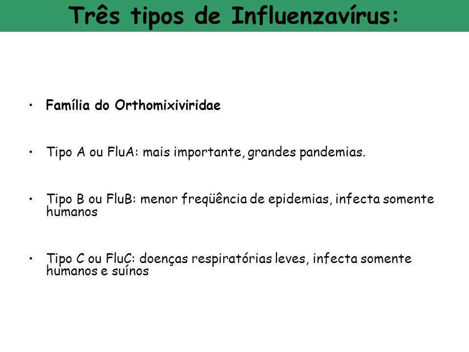 Três tipos de Influenzavírus: