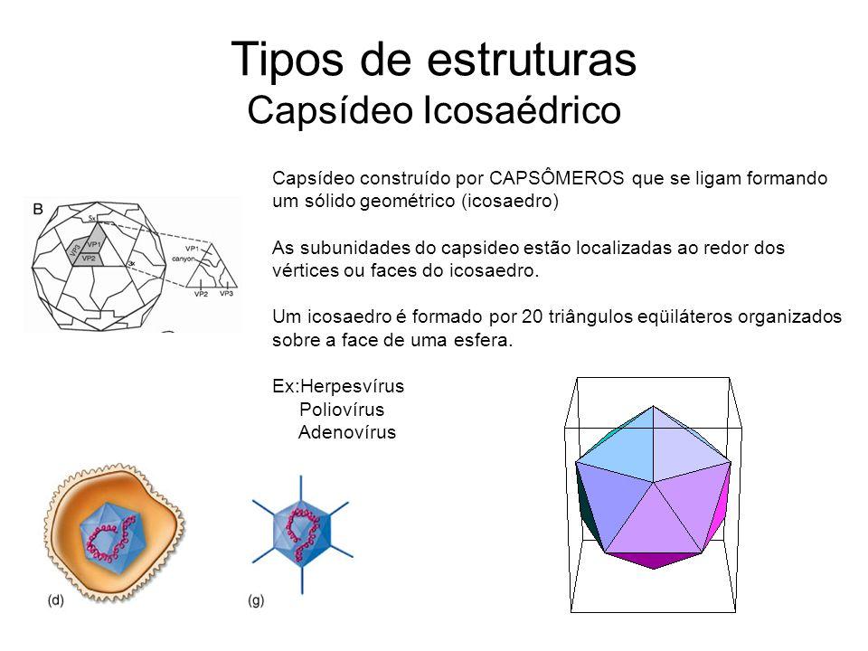Tipos de estruturas Capsídeo Icosaédrico