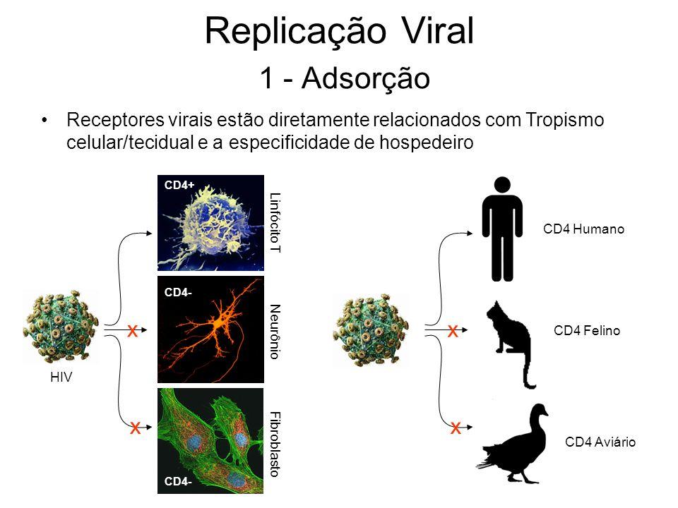 Replicação Viral 1 - Adsorção