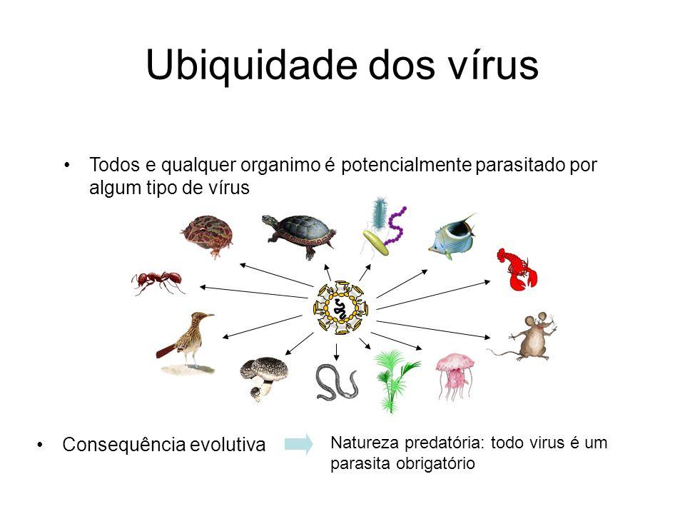 Ubiquidade dos vírus Todos e qualquer organimo é potencialmente parasitado por algum tipo de vírus.