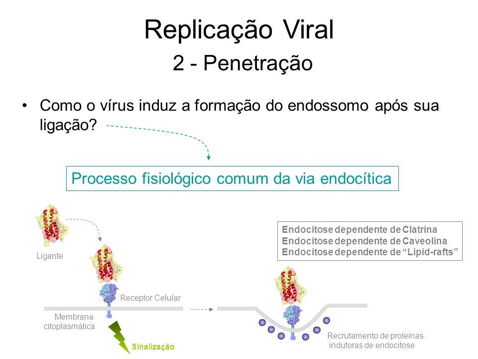 Replicação Viral 2 - Penetração