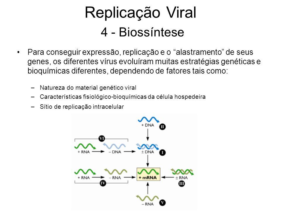 Replicação Viral 4 - Biossíntese