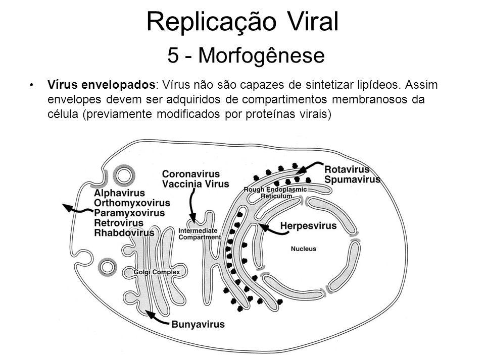 Replicação Viral 5 - Morfogênese