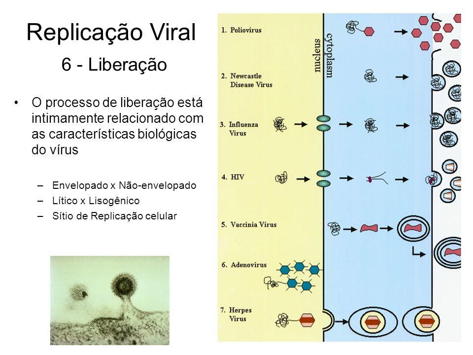 Replicação Viral 6 - Liberação