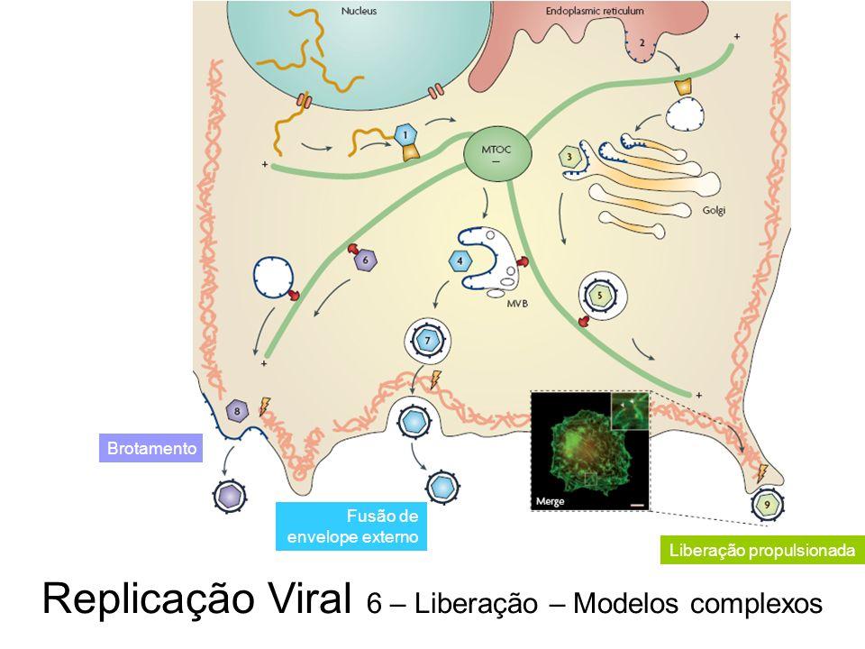 Replicação Viral 6 – Liberação – Modelos complexos