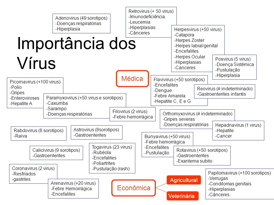 Importância dos Vírus Médica Econômica Agricultural Veterinária