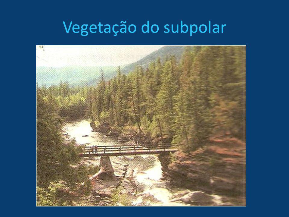 Vegetação do subpolar