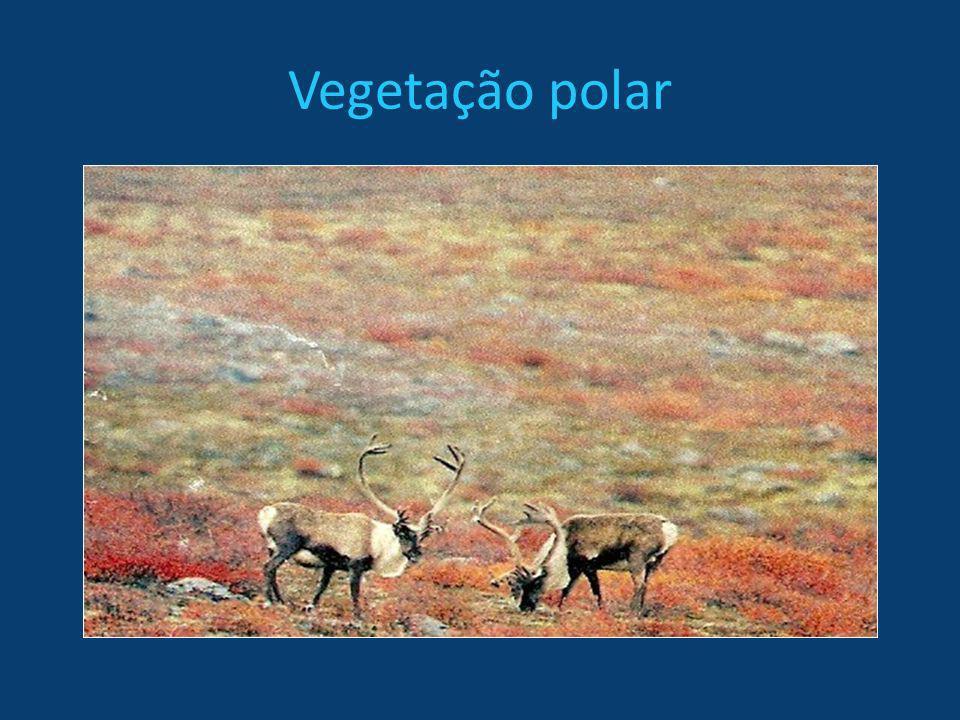 Vegetação polar