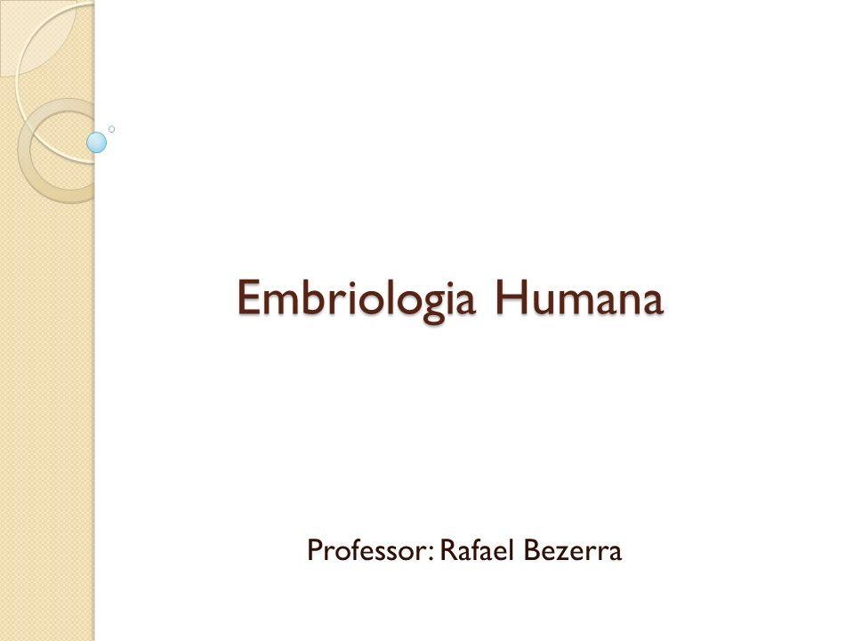 Professor: Rafael Bezerra