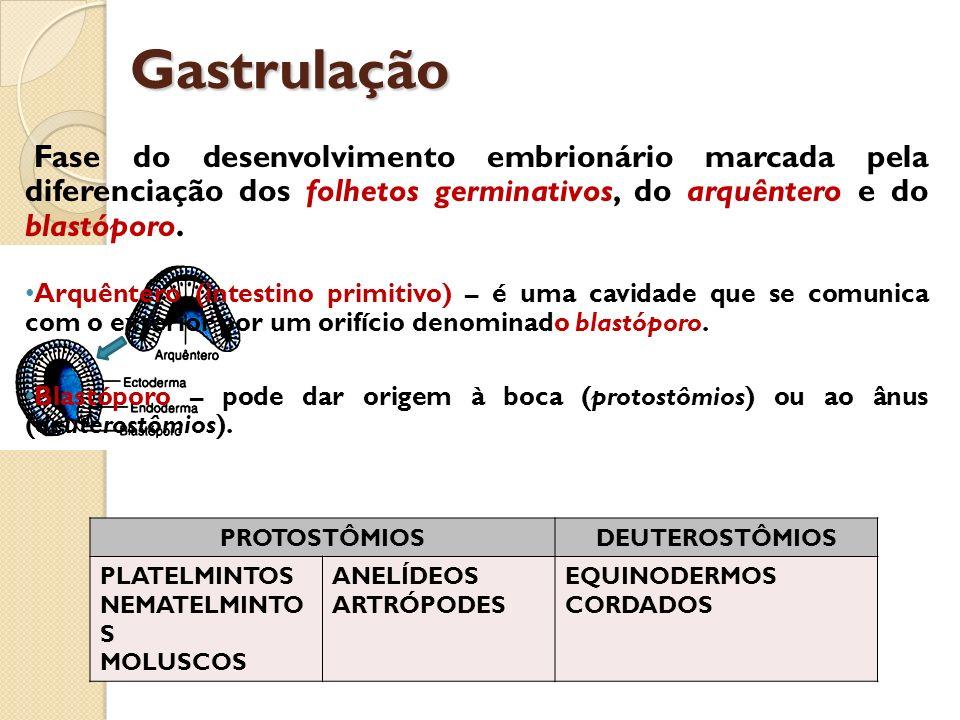 GastrulaçãoFase do desenvolvimento embrionário marcada pela diferenciação dos folhetos germinativos, do arquêntero e do blastóporo.