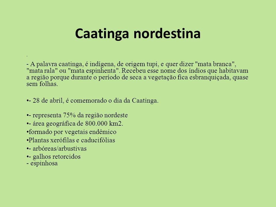 Caatinga nordestina - 28 de abril, é comemorado o dia da Caatinga.