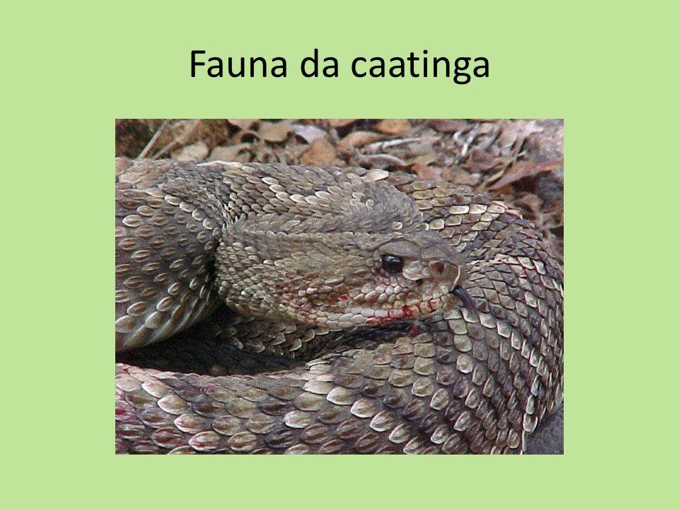 Fauna da caatinga