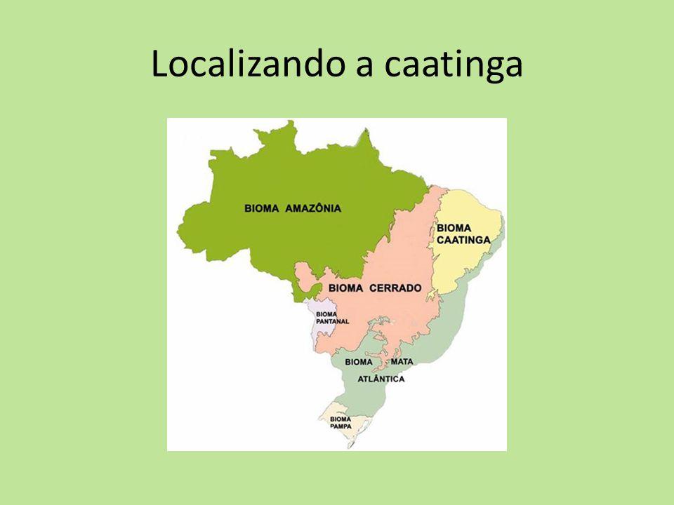 Localizando a caatinga
