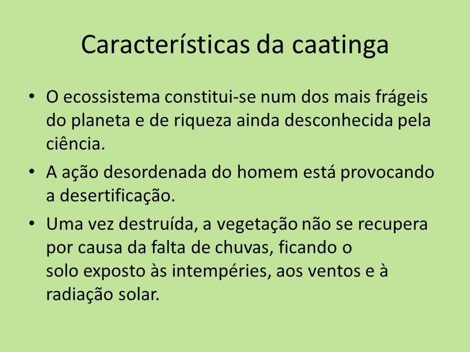 Características da caatinga