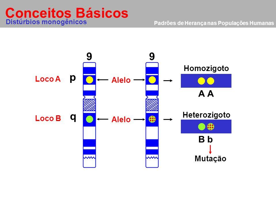 Conceitos Básicos 9 9 p q A A B b Homozigoto Loco A Alelo Heterozigoto