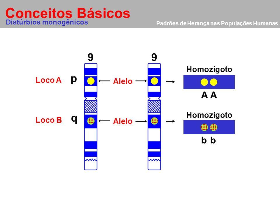 Conceitos Básicos 9 9 p q A A b b Homozigoto Loco A Alelo Homozigoto