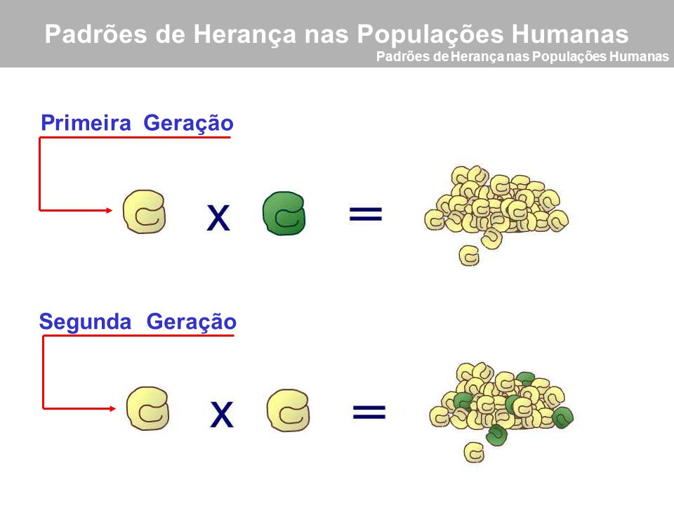 Padrões de Herança nas Populações Humanas